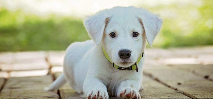 Jakie linie lotnicze przewożą psy i inne zwierzęta?