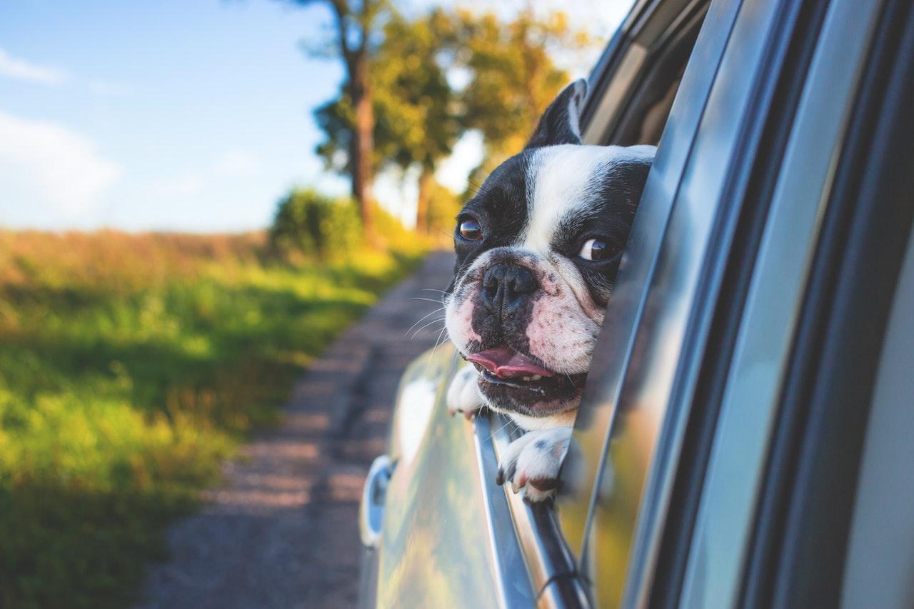 przewóz psów samolotem oraz innych zwierząt